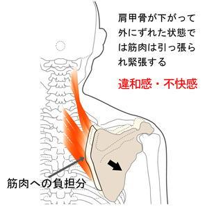 """一般に""""こり""""や""""張り""""と呼ばれているものは、筋肉の性質上、以上のよう... """"首・肩のこり""""を"""