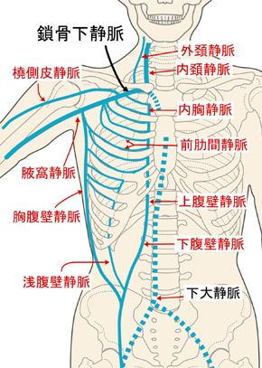 鎖骨下静脈 - Subclavian vein ... : 食品無料プレゼント : 無料
